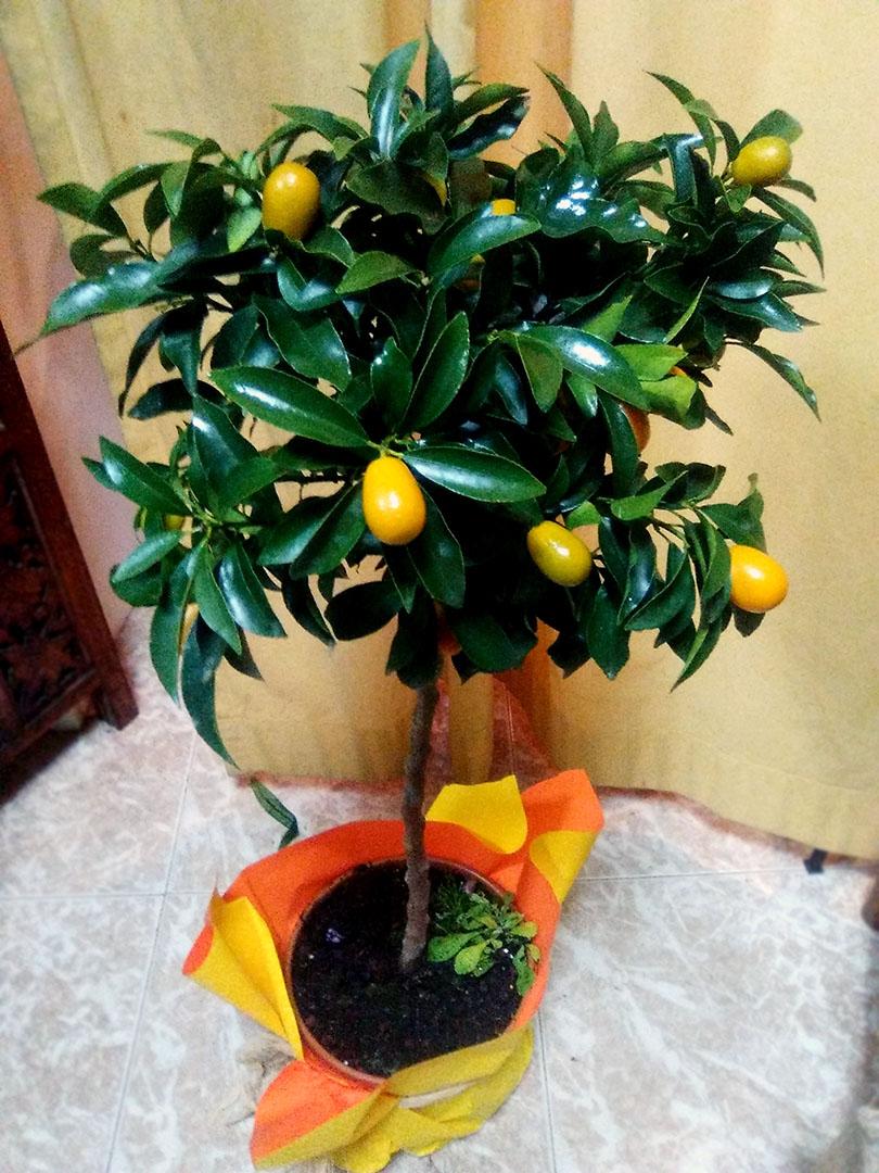 plantas_naturales_1