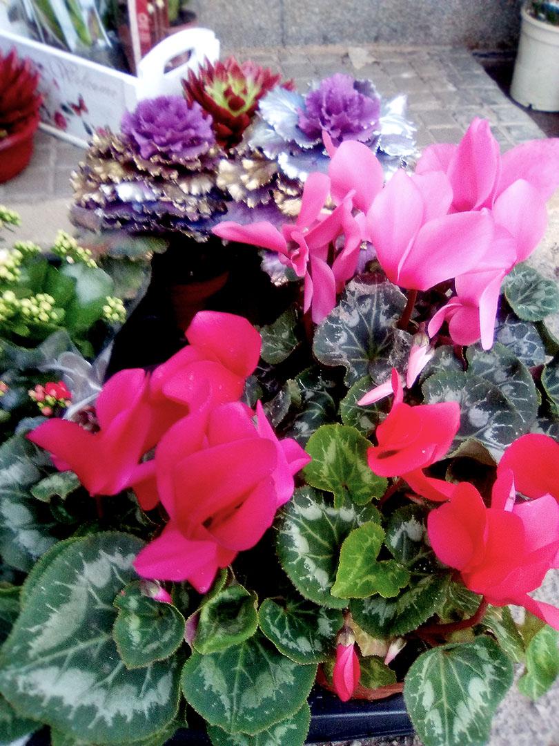 plantas_naturales_2